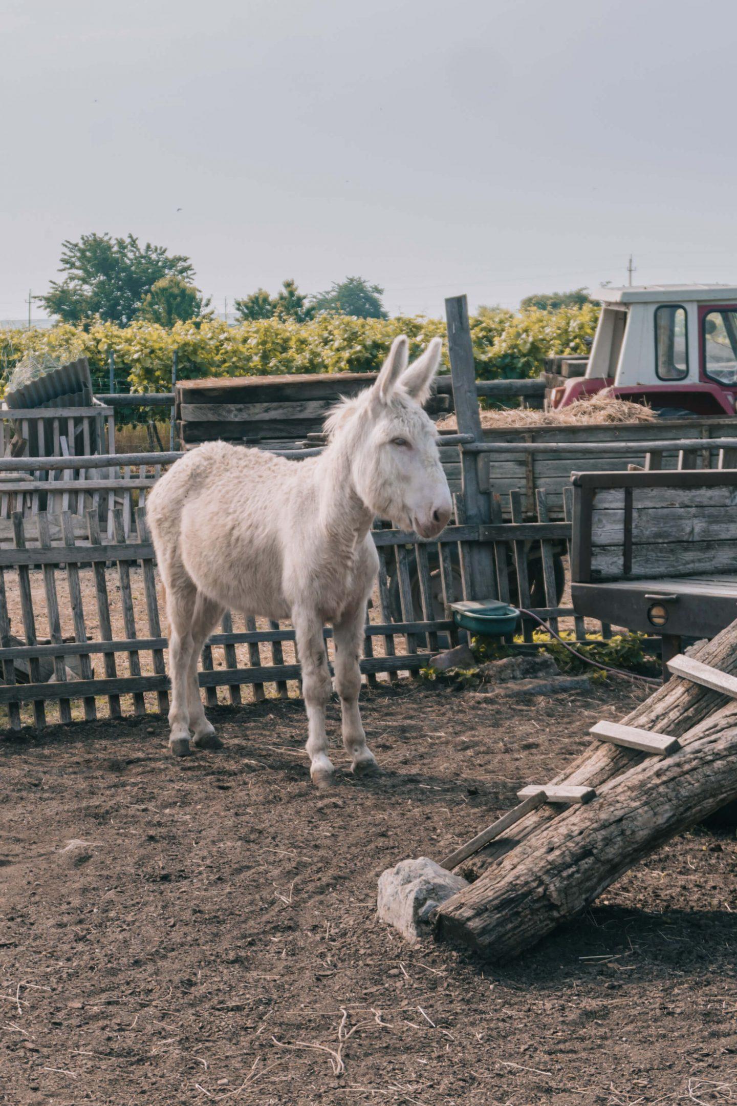 Esel im Biohof Arche zur Grube